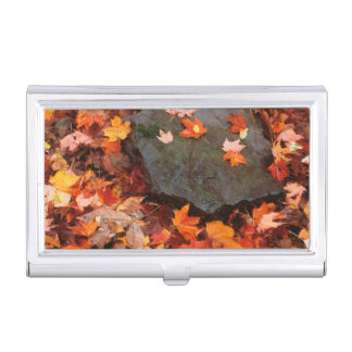 USA, Pennsylvania. Close-Up Of Forest Floor Business Card Cases