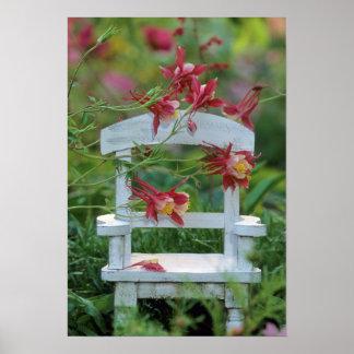 USA, Pennsylvania. Columbine flowers and chair Poster
