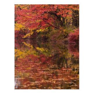 USA, Pennsylvania, Delaware Water Gap National Postcard