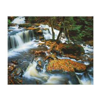 USA, Pennsylvania, Ricketts Glen State Park Gallery Wrap Canvas