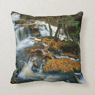 USA, Pennsylvania, Ricketts Glen State Park Cushion