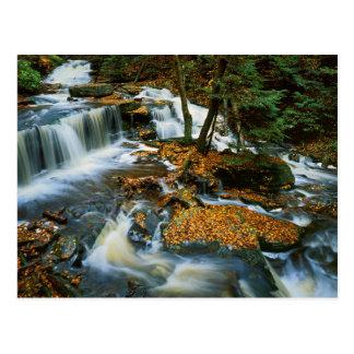 USA, Pennsylvania, Ricketts Glen State Park Postcard
