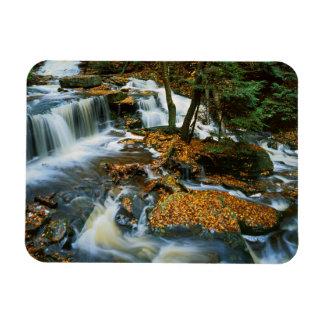 USA, Pennsylvania, Ricketts Glen State Park Rectangular Photo Magnet