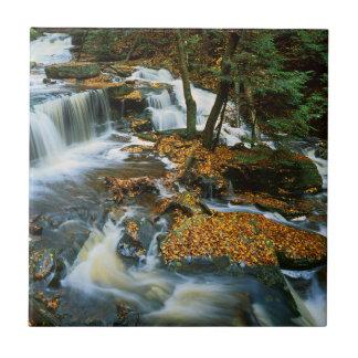 USA, Pennsylvania, Ricketts Glen State Park Small Square Tile