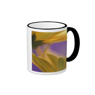 USA, Pennsylvania. Yellow Gerbera Daisies, close Ringer Mug