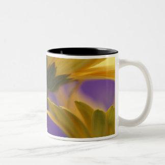 USA, Pennsylvania. Yellow Gerbera Daisies, close Two-Tone Mug