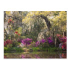 USA, South Carolina, Charleston. Cypress Trees 2 Postcard