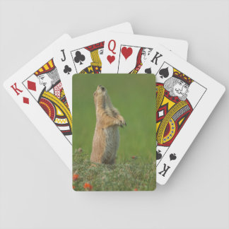 USA, South Dakota, Custer State Park Playing Cards