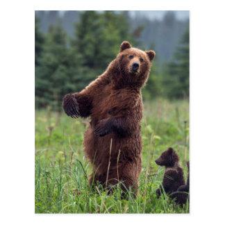 USA, Southeast Alaska, Brown Bear and cub Postcard