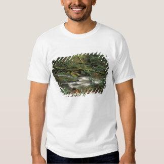 USA, Tennessee. Big South Fork National River Tee Shirts