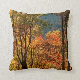 USA, Tennessee. Fall Foliage Cushion