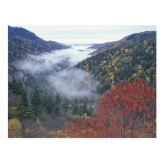 USA, Tennessee, Great Smokey Mountains National Postcard