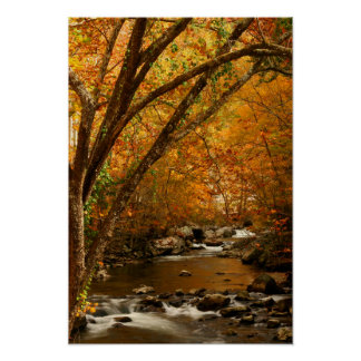 USA, Tennessee. Rushing Mountain Creek 3 Print