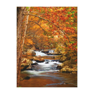 USA, Tennessee. Rushing Mountain Creek Stretched Canvas Print