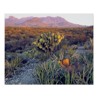 USA, Texas, Big Bend NP. A sandy pink dusk Poster