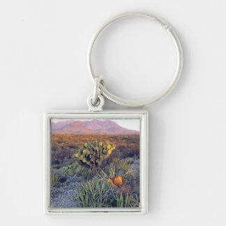 USA, Texas, Big Bend NP. A sandy pink dusk Silver-Colored Square Key Ring