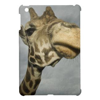 USA, Texas, Fossil Rim Wildlife Area, giraffe iPad Mini Cases