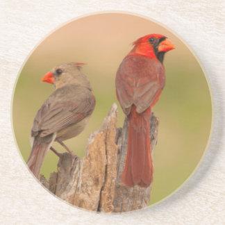 USA, Texas, Hidalgo County. Cardinal Pair Drink Coaster