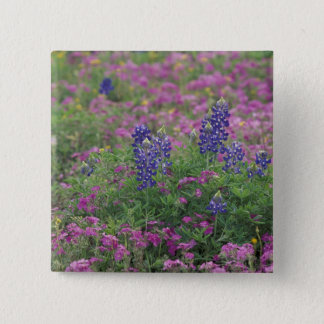 USA, Texas Hill Country. Bluebonnets among phlox 15 Cm Square Badge