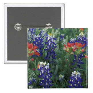 USA Texas Hill Country Bluebonnets and Button
