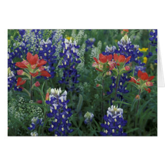 USA, Texas Hill Country. Bluebonnets and Card