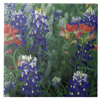 USA, Texas Hill Country. Bluebonnets and Ceramic Tiles
