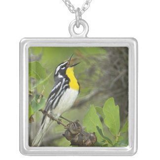 USA, Texas, Hill Country. Male yellow-throated Square Pendant Necklace