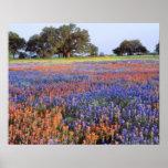 USA, Texas, Llano. Bluebonnets and redbonnets