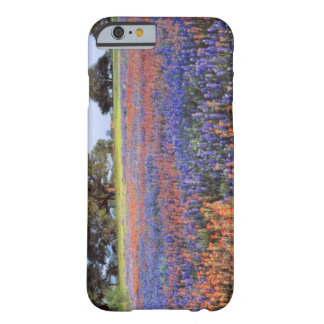 USA, Texas, Llano. Bluebonnets and redbonnets Barely There iPhone 6 Case