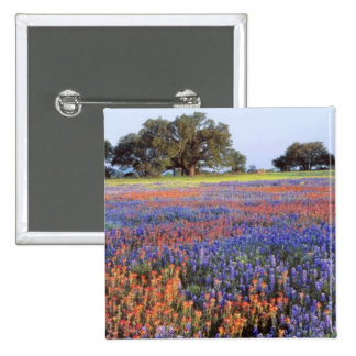 USA Texas Llano Bluebonnets and redbonnets Pins