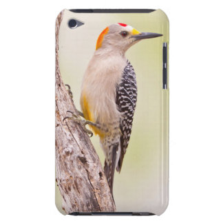 USA, Texas, Mission, Martin-Javelina Ranch. Male iPod Touch Case-Mate Case