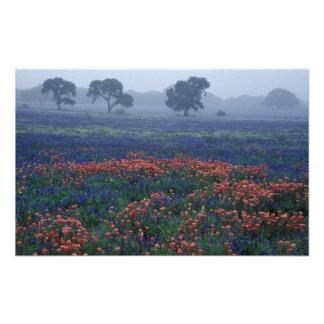 USA, Texas, near Lytle Fog, oaks, blue bonnets Photo