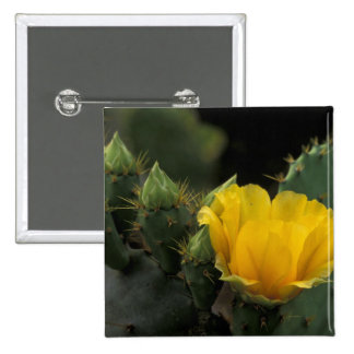 USA Texas Prickly Pear Cactus in bloom Pins