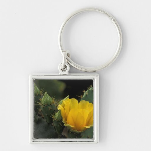 USA, Texas, Prickly Pear Cactus in bloom. Key Chain