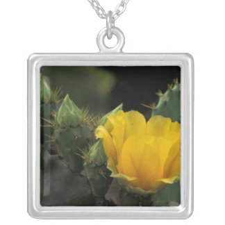 USA, Texas, Prickly Pear Cactus in bloom. Square Pendant Necklace