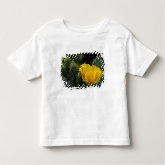 USA, Texas, Prickly Pear Cactus in bloom. Tees