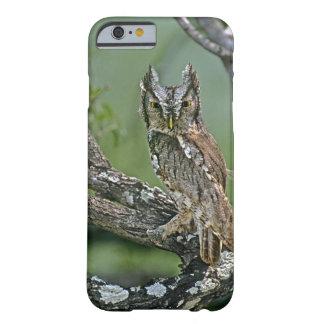 USA, Texas, Rio Grande Valley, McAllen. Eastern Barely There iPhone 6 Case