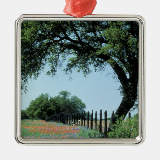 USA, Texas, Texas Hill Country Paintbrush and Silver-Colored Square Decoration