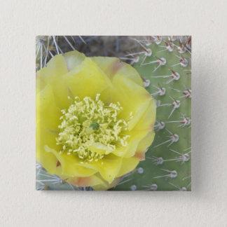 USA, Utah, Canyonlands, NP, Desert Prickly Pear 15 Cm Square Badge
