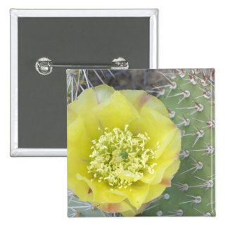 USA Utah Canyonlands NP Desert Prickly Pear Button