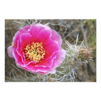 USA, Utah, Canyonlands NP, Desert Prickly Pear Photographic Print