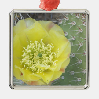USA, Utah, Canyonlands, NP, Desert Prickly Pear Silver-Colored Square Decoration
