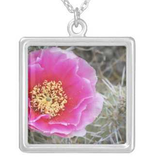 USA, Utah, Canyonlands NP, Desert Prickly Pear Square Pendant Necklace