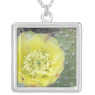 USA, Utah, Canyonlands, NP, Desert Prickly Pear Square Pendant Necklace