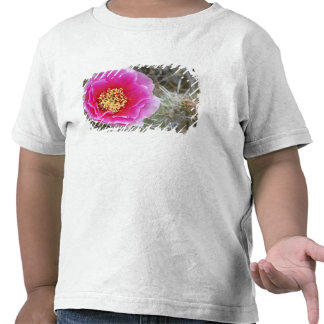 USA, Utah, Canyonlands NP, Desert Prickly Pear T Shirts