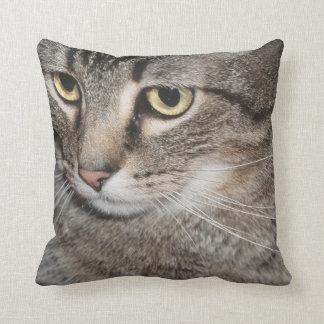 USA, Utah, Close-up of domestic cat Cushions