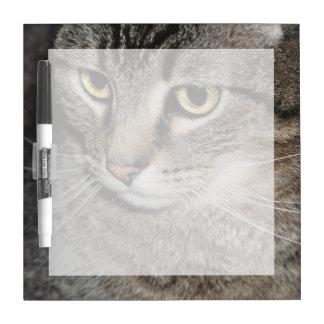 USA, Utah, Close-up of domestic cat Dry-Erase Whiteboards