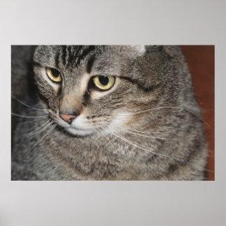USA, Utah, Close-up of domestic cat Poster