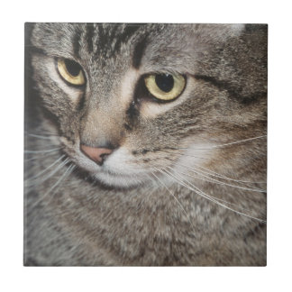 USA, Utah, Close-up of domestic cat Small Square Tile