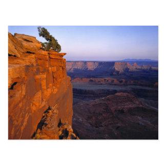 USA, Utah, Dead Horse Point SP. Late light turns Postcard